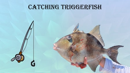 is triggerfish good for you