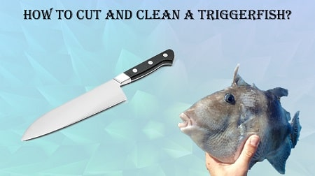 are triggerfish safe to eat