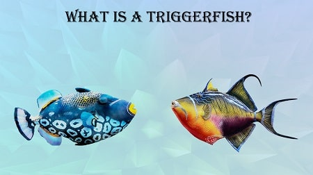 What Does Triggerfish Taste Like